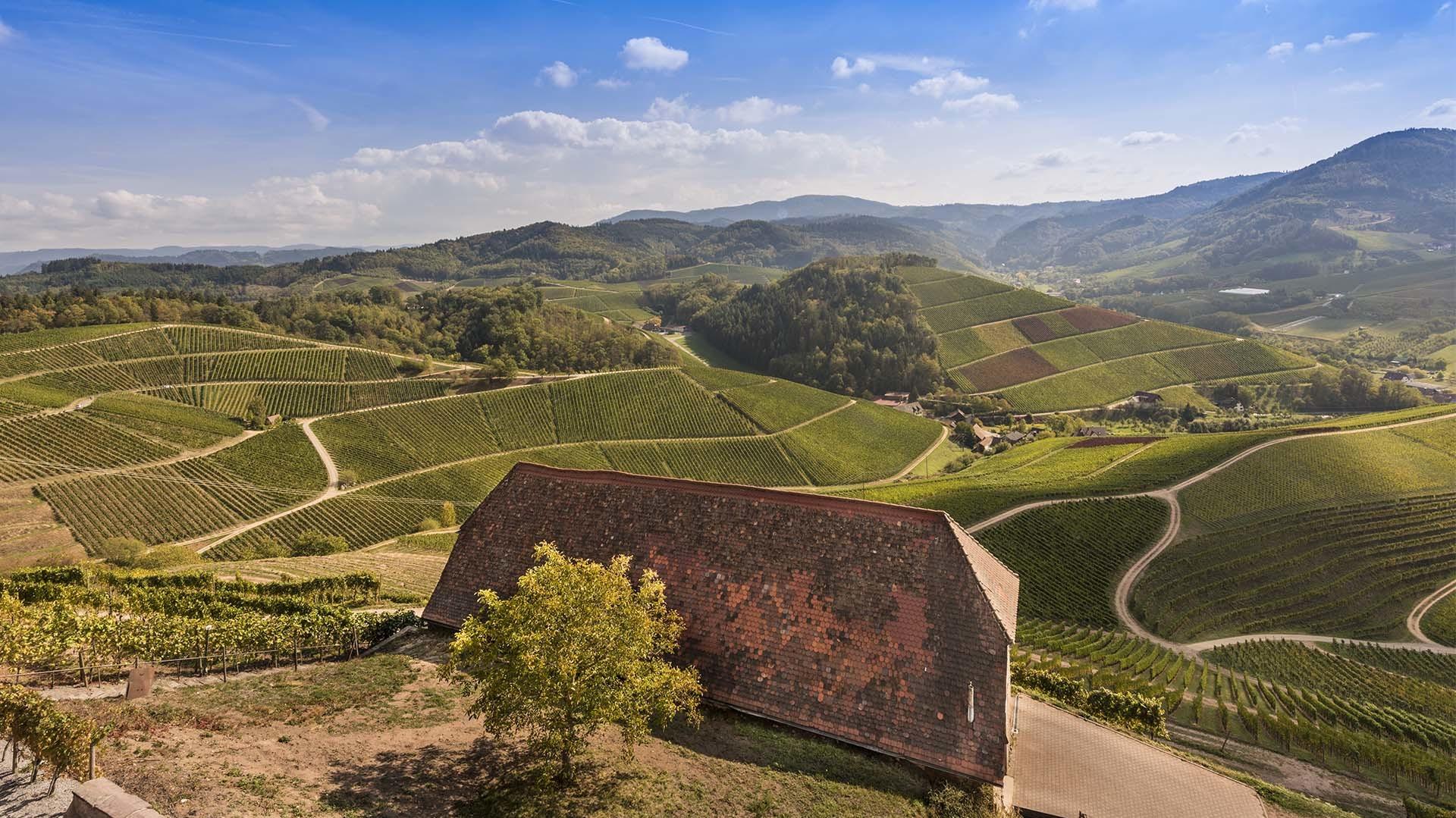 Landschaft_Blick vom Schloss auf Reben in Richtung Gebirg