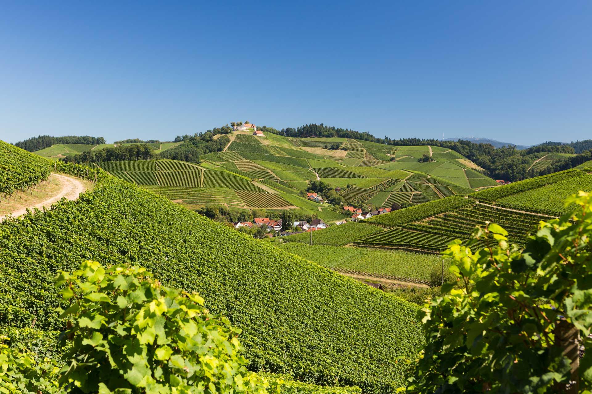 Landschaft_Blick-auf-Weinreben-und-Schloss-von-Sendelbach-aus
